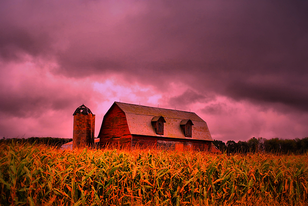Barn Photograph - Pink Barn  by Emily Stauring