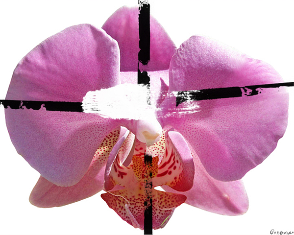 Flower Painting - Pink Cowboy Hat Crucio by Geronimo