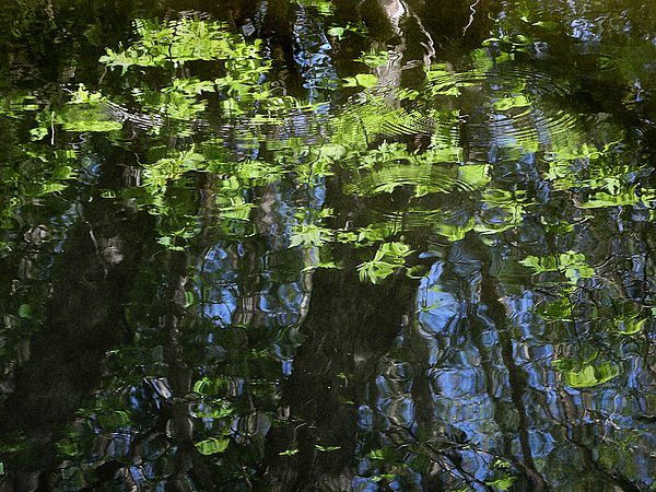 Horizontal Photograph - Pond Reflection 1 by Janeen Wassink Searles
