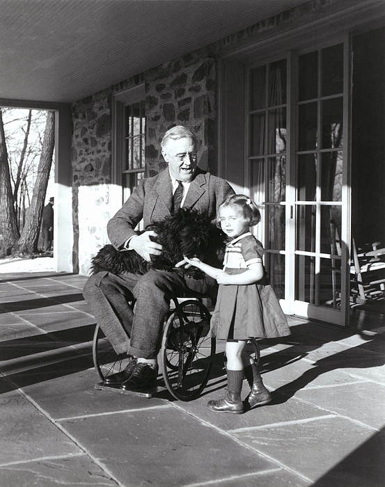 History Photograph - President Roosevelt In His Wheelchair by Everett