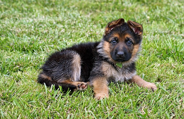 Puppy In The Spring Photograph