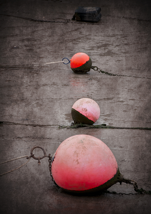 Anchored Photograph - Red Buoys  by Svetlana Sewell