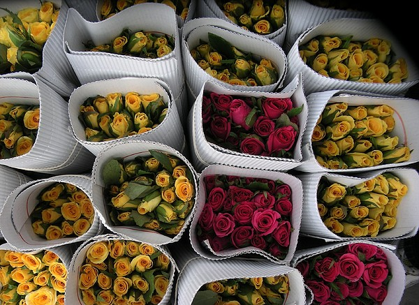 Rose Flowerc Bunches Photograph - Rose Bunches by Mohammed Nasir