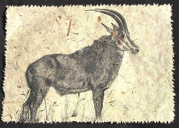 Sable Antelope Drawing by Ray Harris