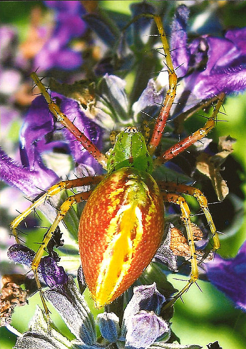 Spiders Photograph - Scary Spider by Janet Pugh
