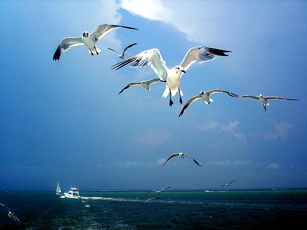 Seagulls Photograph - Seagulls  by Brittany H