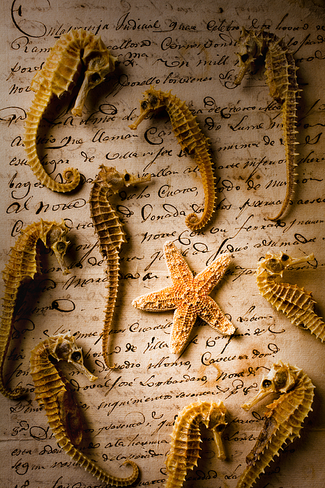 Seahorses Starfish Old Letter Words Photograph - Seahorses And Starfish On Old Letter by Garry Gay