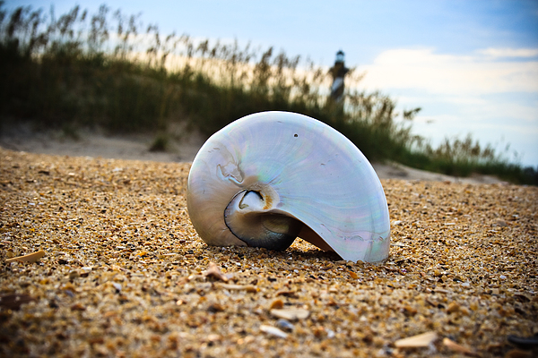 Shell Photograph - Shell by Gasin Trossen