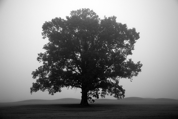 foggy Trees Photograph - Shelter by Amanda Barcon