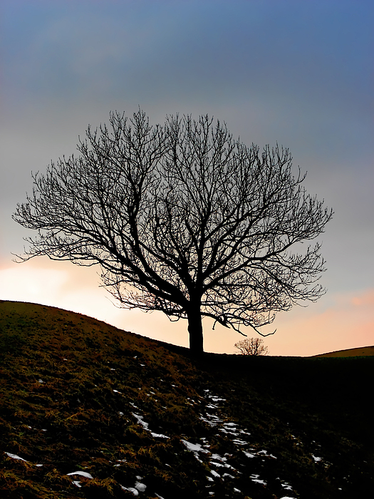Tree Photograph - Silhouette Of A Tree On A Winter Day by Christine Till
