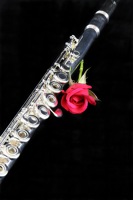 Silver Flute Red Rose Photograph