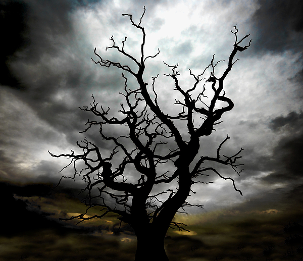 Skeletal Tree Photograph