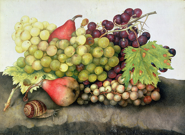 Snail Painting - Snail With Grapes And Pears by Giovanna Garzoni