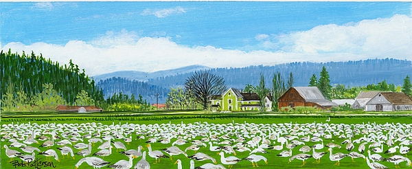 Washington State Skagit County Painting - Snow Geese And A Farm House by Bob Patterson