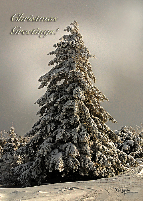 Standing Tall Christmas Card Print by Lois Bryan