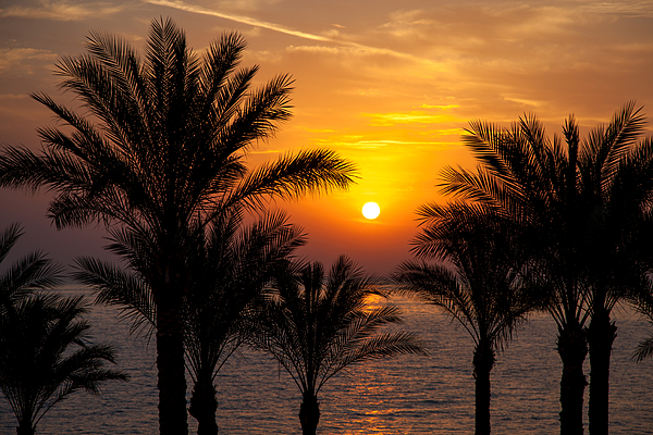 Background Photograph - Sunrise Over The Red Sea by Jane Rix