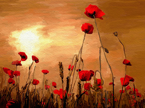 Impressionism Painting - Sunset Poppies by James Shepherd