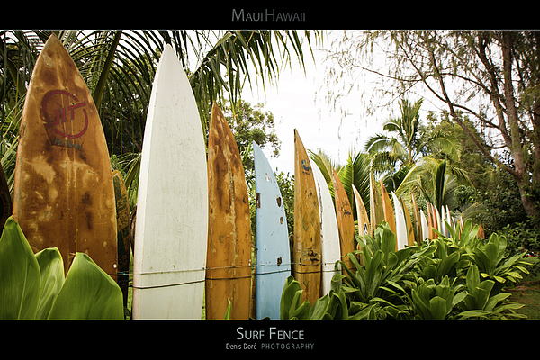 Adrenaline Aquatics Beach Board Fun Glow Hawaii Islands Light Local Oahu Ocean Pacific People Recreate Recreation Sea Shore Sport Sports  Summer Sun Sunset Surf Surfboard Surfer Surfing Vacation Vitality Water Water-sports Wave White Wind Hookipa Poster Posters maui Poster maui Posters hawaii Poster hawaii Posters maui Hawaii Poster maui Hawaii Posters Fence Maui Hawaiian Trees Vegetation Green Colors Palm Photograph - Surf Fence - Maui Hawaii Posters Series by Denis Dore