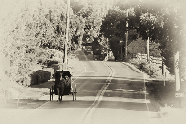 The Amish Buggy Photograph - The Amish Buggy by Bill Cannon