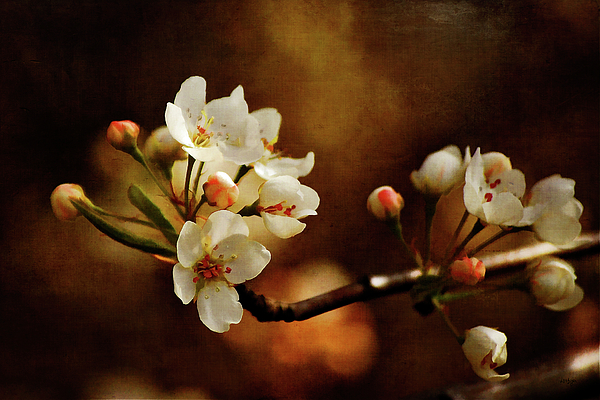 The Fleeting Sweetness Of Spring Photograph