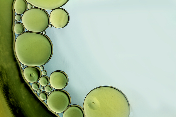 Oil Photograph - The Grass Is Greener by Rebecca Cozart