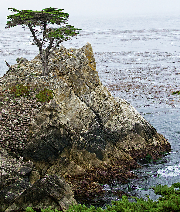 Lone Photograph - The Lone Cypress - California by Brendan Reals