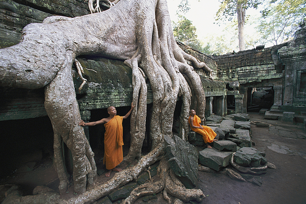 strangler Fig Trees Photograph - The Roots Of A Strangler Fig Creep by Paul Chesley