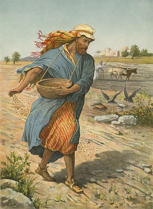 Bible; Children's; Jesus Christ; Seed; Sower; Parable Painting - The Sower Sowing The Seed by English School