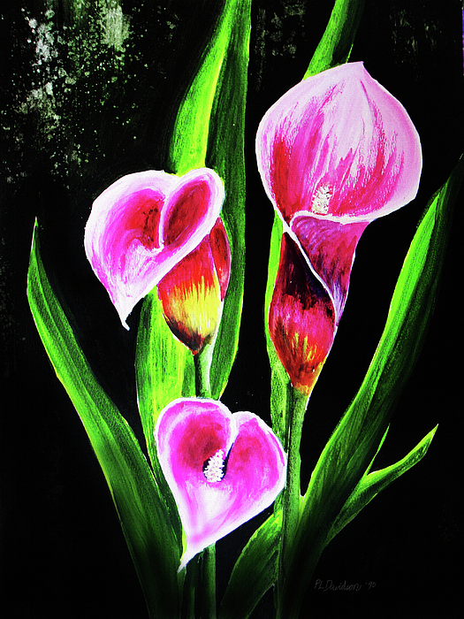 Three Pink Calla Lilies. Painting by Patricia L Davidson