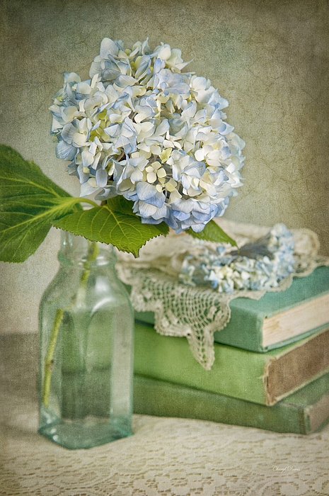 Hydrangea Photograph - Touch Of Blue by Cheryl Davis