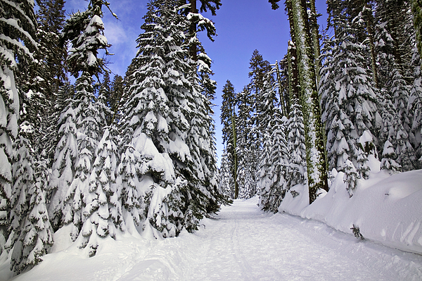 Snow Photograph - Trail Through Trees by Garry Gay