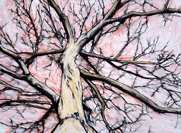 Tree Drawing - Tree With Red Sky by John Terwilliger