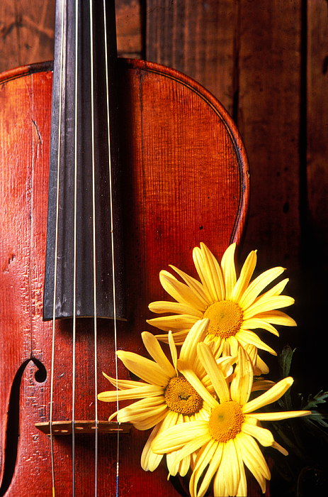 Violin With Daises  Photograph