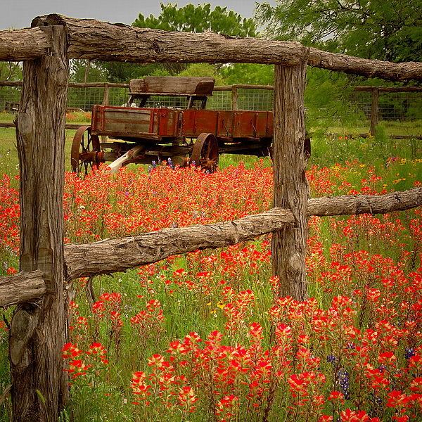 Wagon In Paintbrush - Texas Wildflowers Wagon Fence Landscape Flowers Photograph