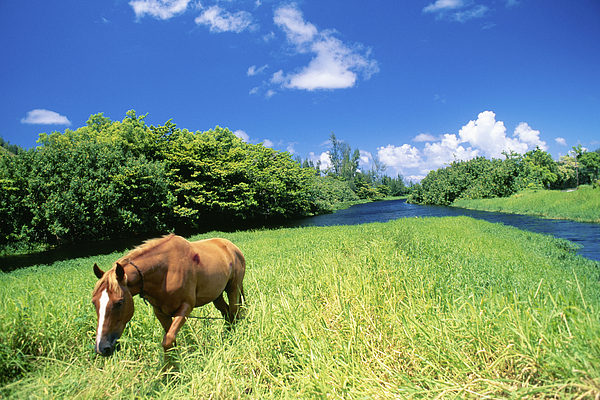 Animal Art Photograph - Wainiha Valley by Peter French - Printscapes