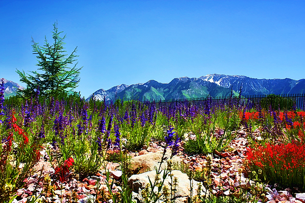 Wasatch Mountains In Spring Photograph
