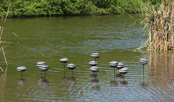 Water Sculpture - Water Mushrooms by Dawn Whitehand