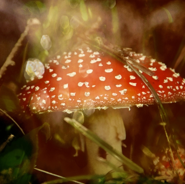 Toadstool Photograph - Welcome To Wonderland by Odd Jeppesen