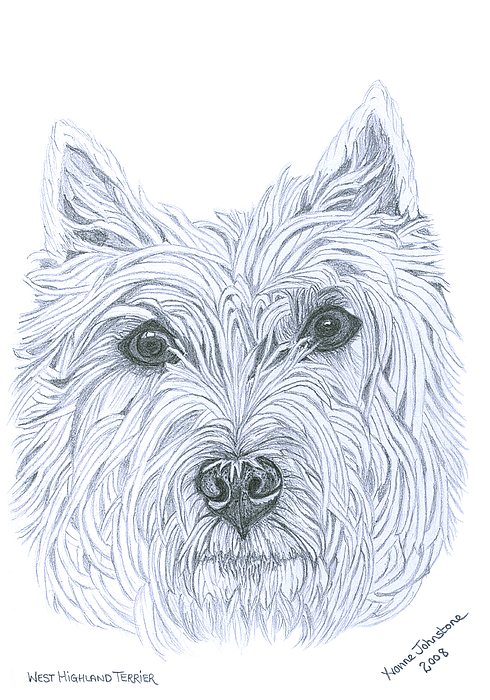 West Highland Terrier Drawing - West Highland Terrier by Yvonne Johnstone