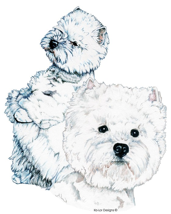 West Highland White Terriers Drawing