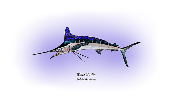 White Marlin Painting - White Marlin by Ralph Martens