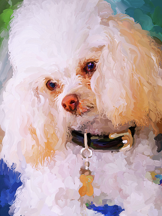 White Poodle Painting by Jai Johnson