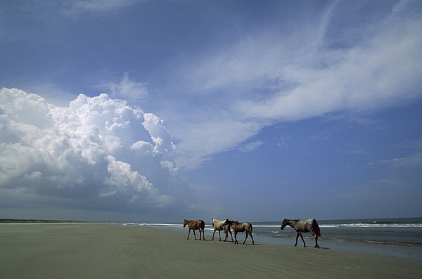 Clouds Photograph - Wild Horses Roaming A Georgia Coast by Michael Melford