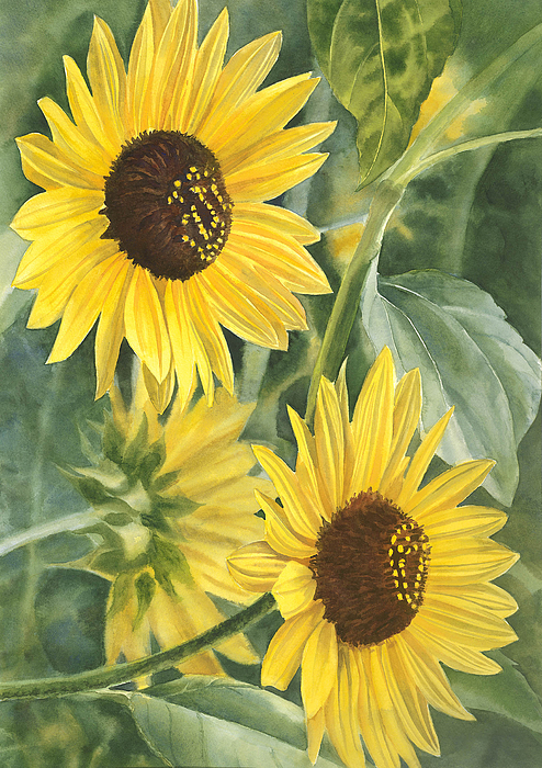 Sunflower Painting - Wild Sunflowers by Sharon Freeman