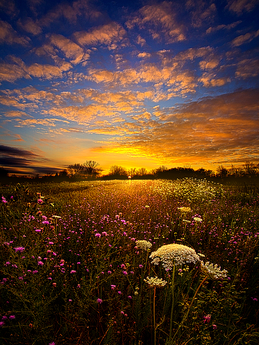 Windsong Photograph By Phil Koch