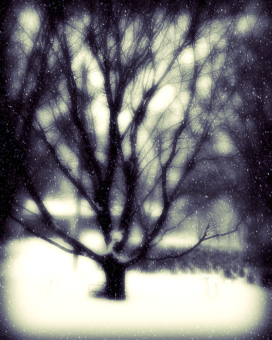 Tree Photograph - Winter Tree 3 by Perry Webster