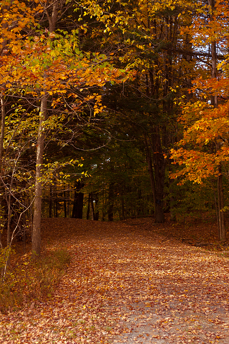East Coast Photographs Photograph - Wonderful Fall Colors by Robert  Torkomian