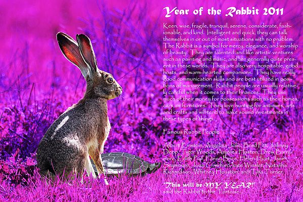 Year Of The Rabbit Photograph - Year Of The Rabbit 2011 . Magenta by Wingsdomain Art and Photography
