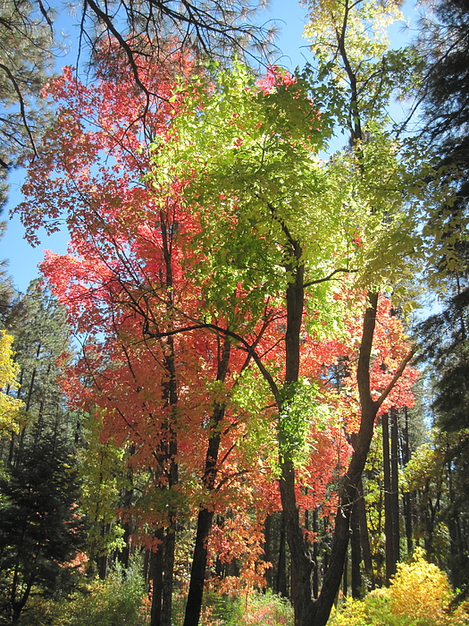 Fall Photograph - Yummy Fall Colors by Sandy Tracey