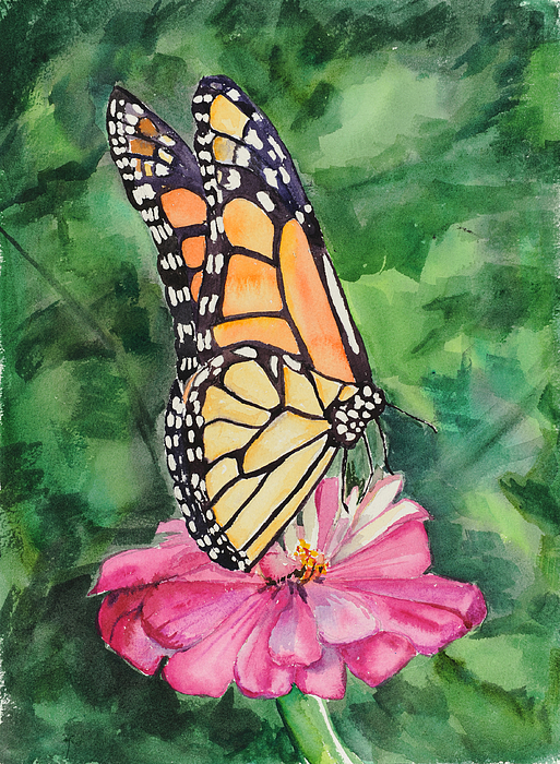 Watercolor. Butterfly Painting - Zinnia And Monarch by Judy Loper